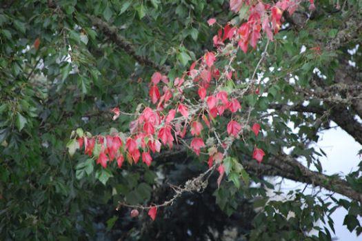 MoreTrees Turning - Garden Bloggers Bloom Day - September