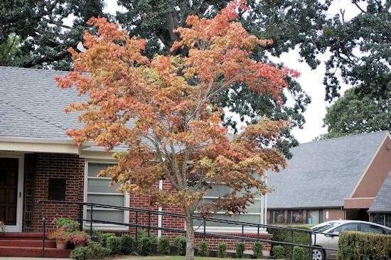 Trees Turning - Garden Bloggers Bloom Day - September