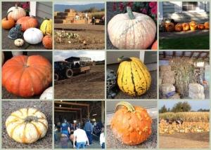 Mosaic Monday - Trip To A Pumpkin Farm