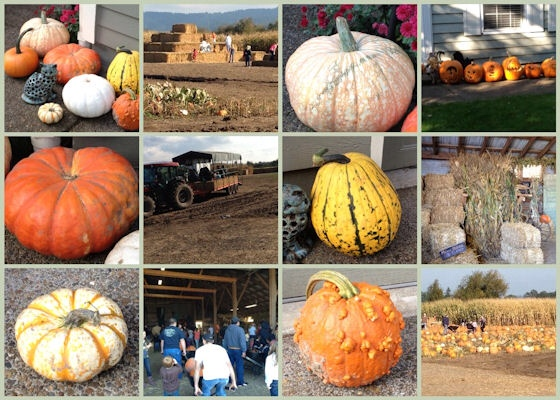 Mosaic Monday - Trip To A Pumpkin Farm