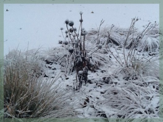 Echinacea Seedheads In The Snow