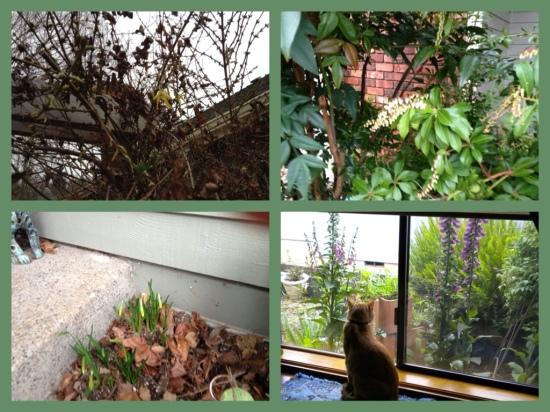 Garden Bloggers Bloom Day - February