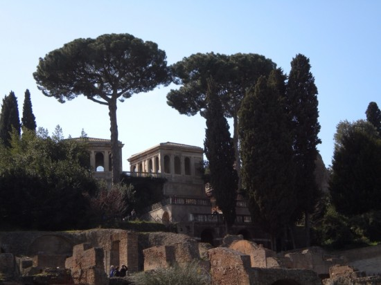 Italian Pine At Roman Forum