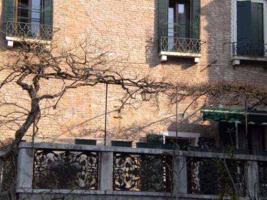 Very Old Grape Vine Venice Italy