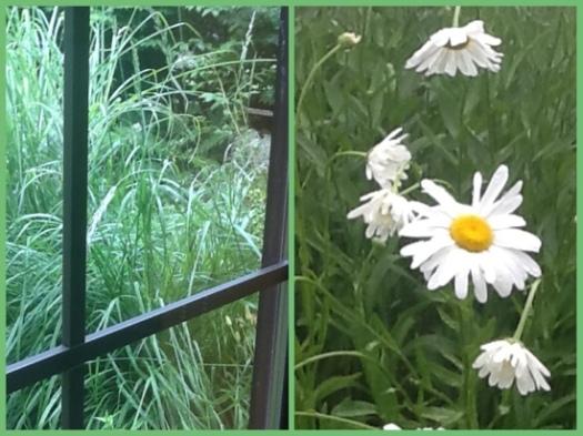 Rain Beaten Plants
