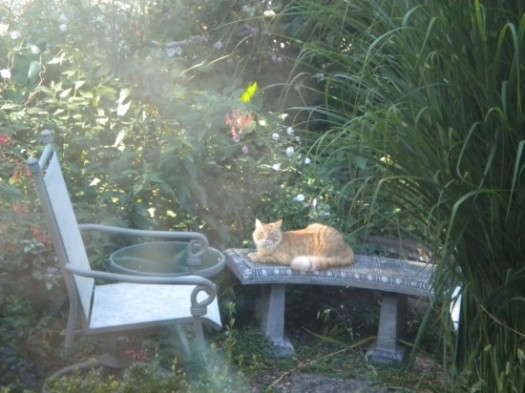 Neighbor's Cat On Our Bench