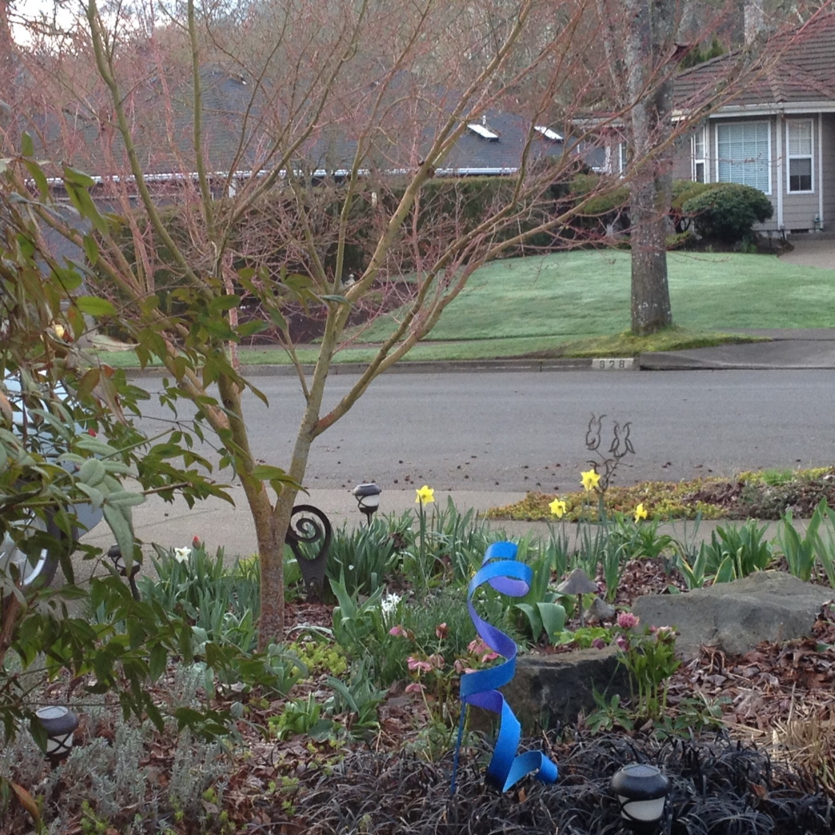 Blooming Front Yard