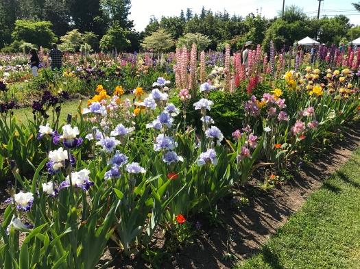 Schreiner's Display Garden