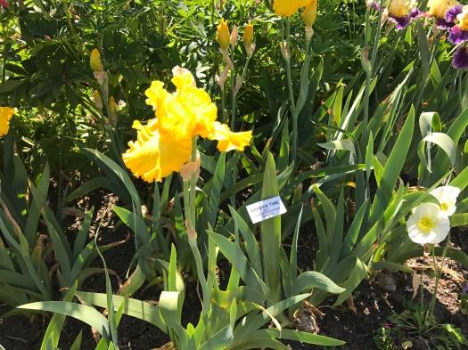 Iris Garden Time